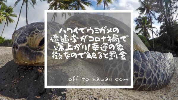 ハワイでウミガメに会える確率が上がった理由